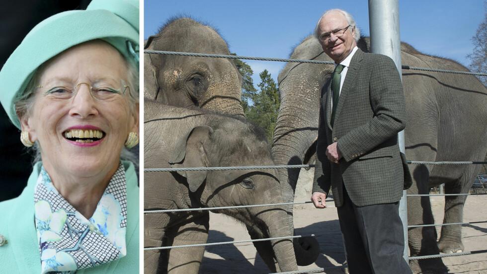 SNABELAKTIG BABYNYHET: Kong Carl Gustaf og dronning Margrethe kan glede seg over at deres to elefanter skal bli foreldre. Foto: TT NYHETSBYRÅN