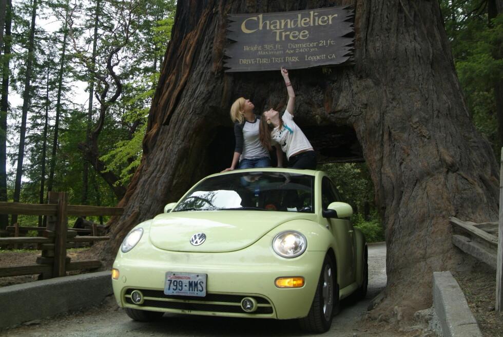 STOR SKOG: Redwoodtrærne i California er verdens mest imponerende. Foto: Runar Larsen