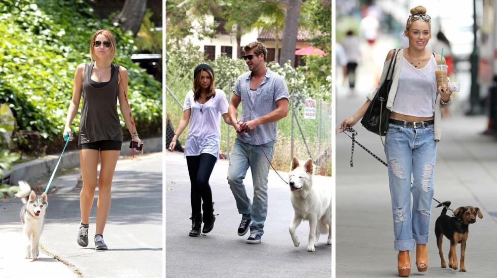 DYREELSKER: Miley Cyrus deler i disse dager ofte bilder av dyrene sine på Instagram, mens hun tidligere ofte ble fotografert på luftetur med dem. Her er hun på tur med elskede Floyd (t.v) våren 2012, og med to andre hunder sommeren 2010 og 2012. Liam Hemsworth, hennes daværende kjæreste, er med på bildet i midten. Foto: NTB Scanpix