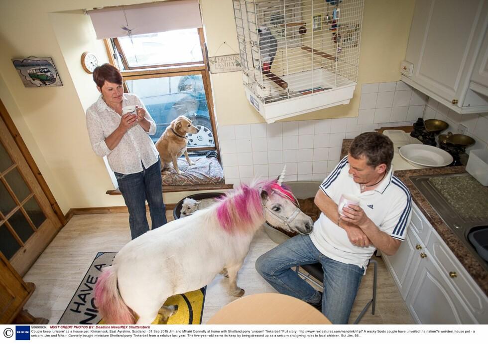 I HUSET: Selv om Tinkerbell stort sett oppfører seg, kaller familiens papegøye hesten for en skitten hund. Foto: Rex Features
