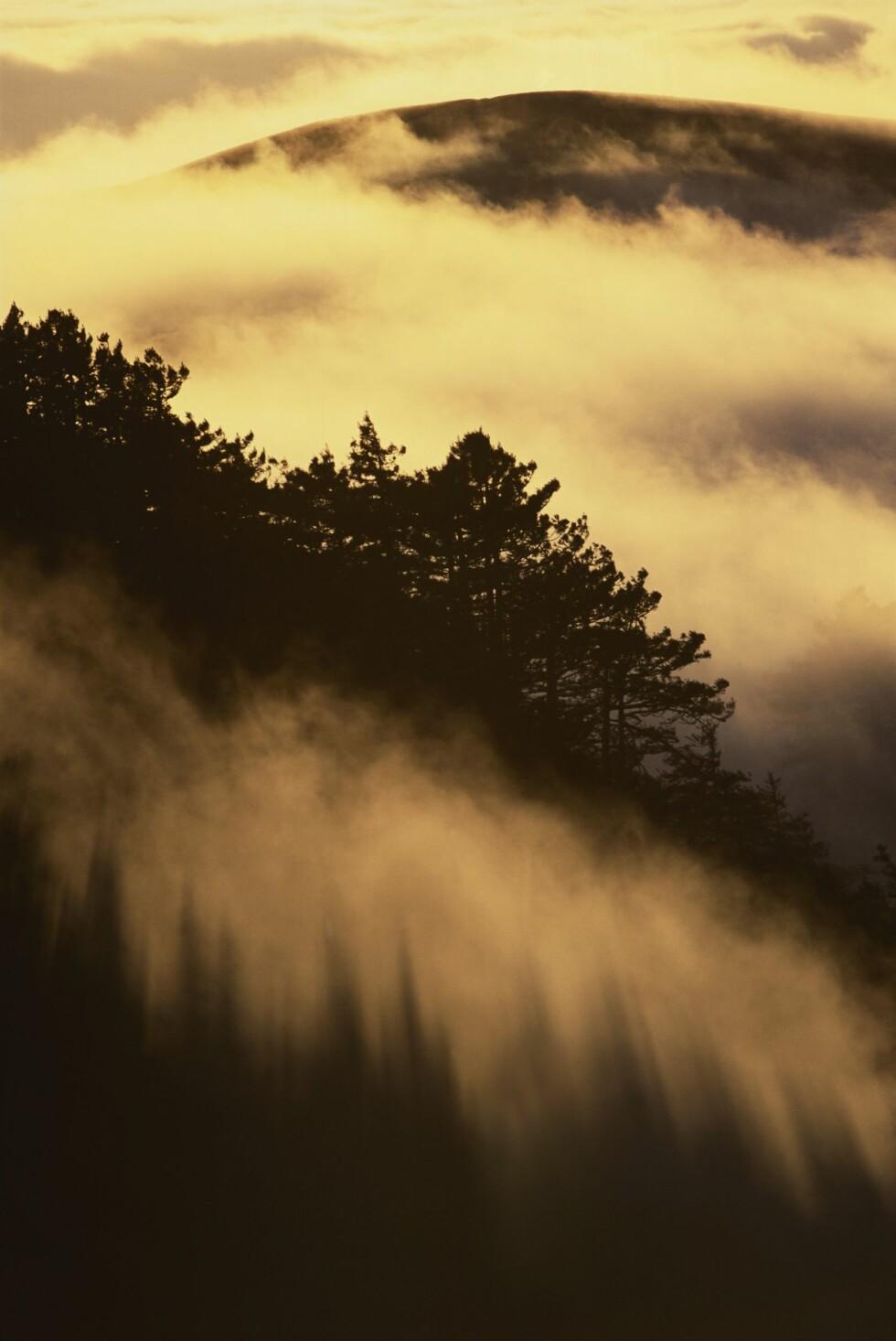 UNIK NATUR: I Big Sur kan man også finne de berømte Redwood-trærne. Foto: Mint Images/REX/All Over Press