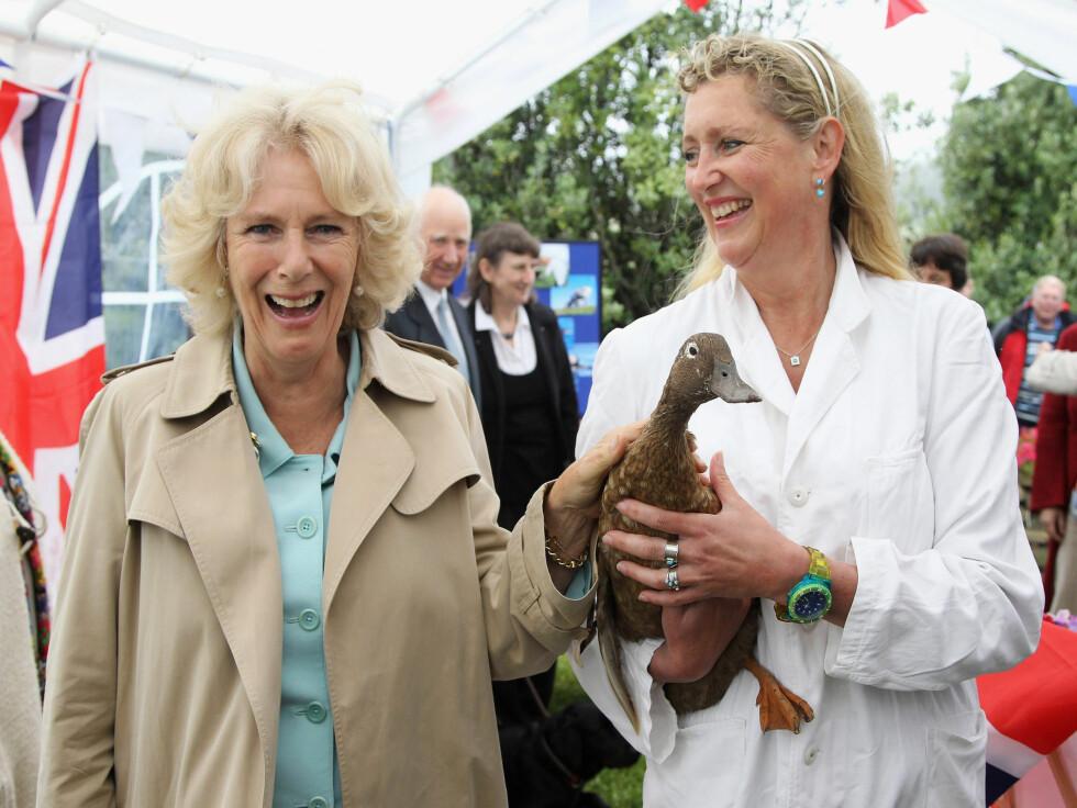 <strong>SPORTY:</strong> Hertuginne Camilla av Cornwall klappet gjerne anden Jemima Puddleduck, som veterinær Heike Dorn presenterte henne for på øya St. Marys tirsdag denne uken.   Foto: All Over Press