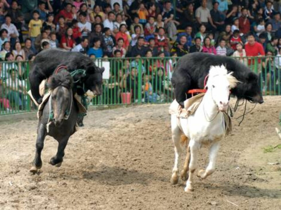 Two bears ride on horses during a show at the Animal Games in a wildlife park in Nanjing, in eastern China's Jiangsu province Tuesday Oct. 3, 2006. The show was one of many events held to attract visitors to the park during the week-long National Day holi Foto: AP
