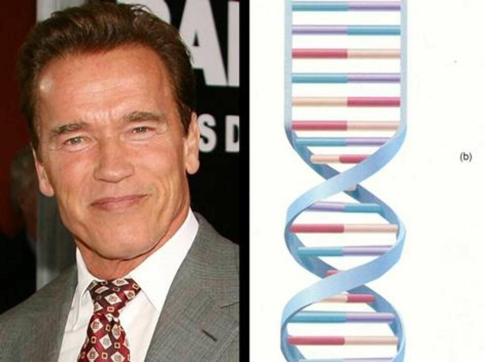 """EBAY: Man kan gjerne undre seg hvilke gener Arnold Schwarzenegger har, men en kar prøvde i hvert fall å selge """"The Gouvenators"""" DNA på nettet. Auksjonen ble selvsagt fjernet umiddelbart ... Foto: All Over Press"""