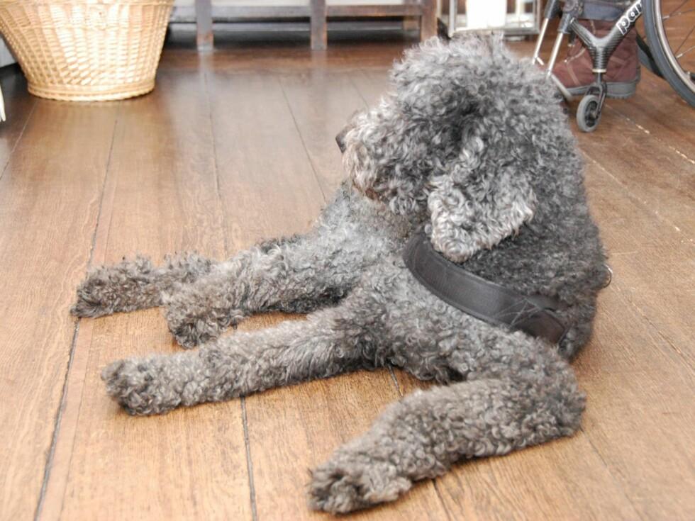 SLÆKKER: Kronprinsfamiliens hund Milly Kakao var et populært innslag på seminaret. Foto: Det kongelige hoff/Kronprinsparets Facebookside