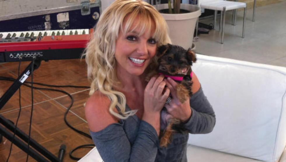 «MAMMA» IGJEN: Britney Spears er nettopp blitt matmor til en hund, som har fått navnet Hannah Spears - og egen profil på Twitter så klart... Foto: Britney Spears/ Twitter