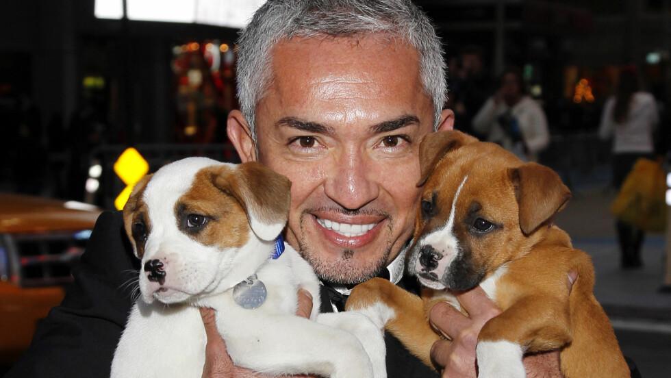 DYREVENN: Cesar Millan elsker hunder og de elsker også han. Foto: FameFlynet