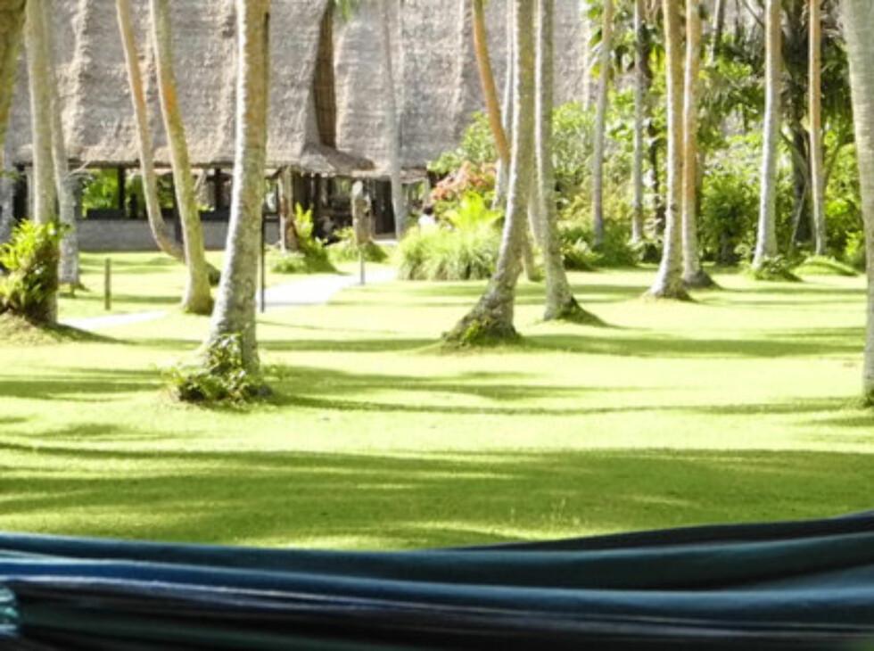 HENGEKØYE: Mellom palmene er det heng opp hengekøyer for asvlappende siesta.