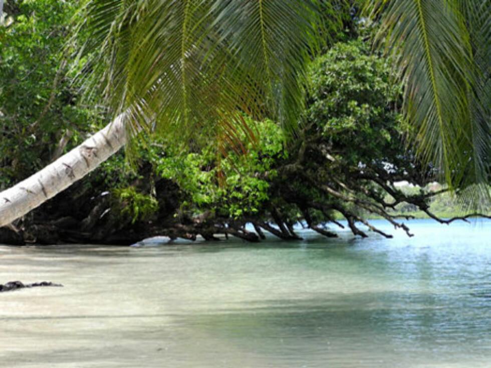 PARADIS: Palmene henger urt over strander, og er et vakkert skue.