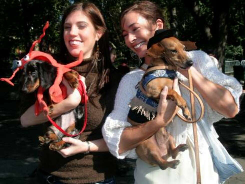 NEW YORK 2006-10-07.  Saturday October 7th was Dachshund Day in New York City. People brought their Dachshund dogs to a Special Party in the park. Only Dachshunds allowed... but some Great Danes infiltrated the special day!     Photo: MLM/Fame Pictures Co Foto: Stella Pictures