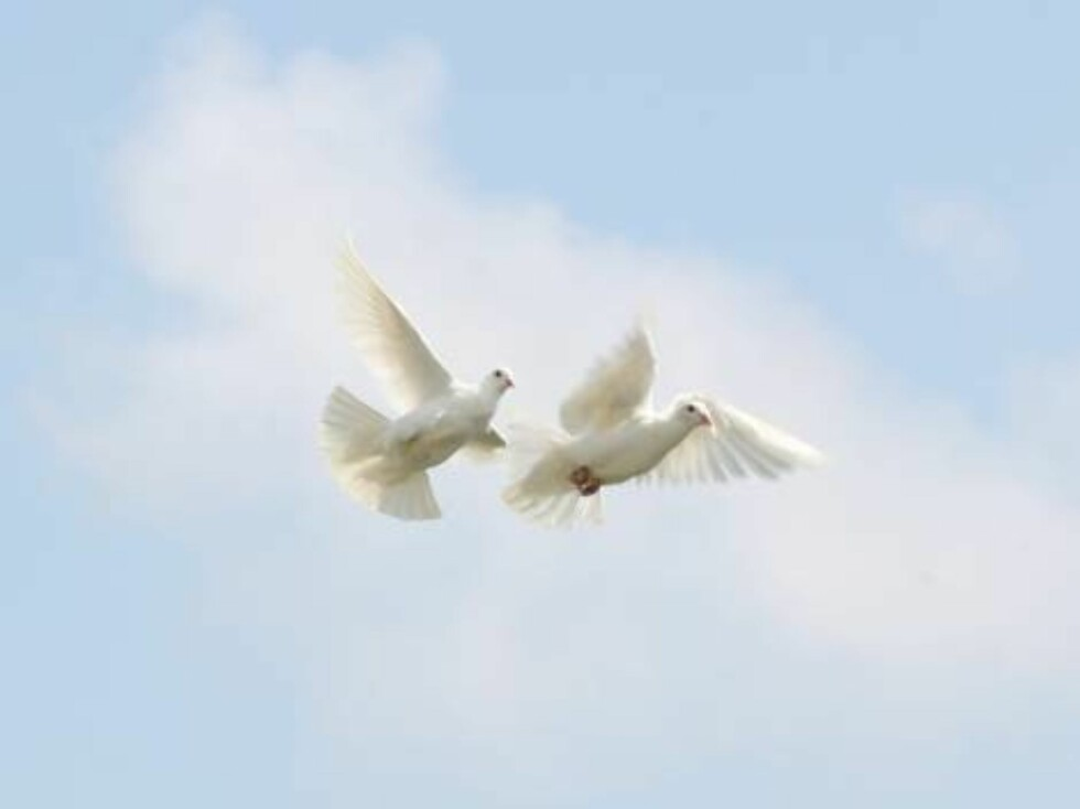 A funeral service was held for Anna Nicole Smith at the Mount Horeb Baptist Church in Nassau on March 2, 2007. Proceeds from the sale of these pictures will go to the Dannielynn Hope Irrevocable Trust  Pictured: Doves   Ref: TAN 020307 S   Foto: All Over Press