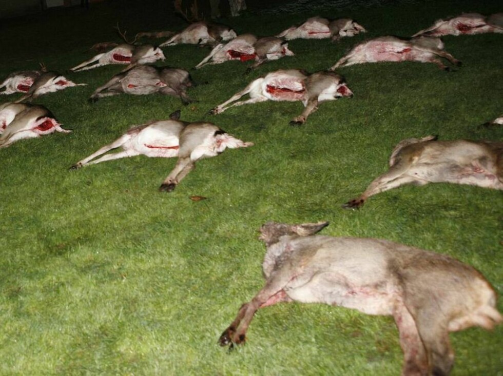 GRIB FOREST 2006-12-12.  Royal hunt in the Grib Forest. Prince Henrik of Denamrk shot three animals and Crown Prince Frederik shot four. Later in the evening at the Hunting Parade Crown Princess Mary and Prince Christian joined the party at Fredensborg Pa Foto: Stella Pictures