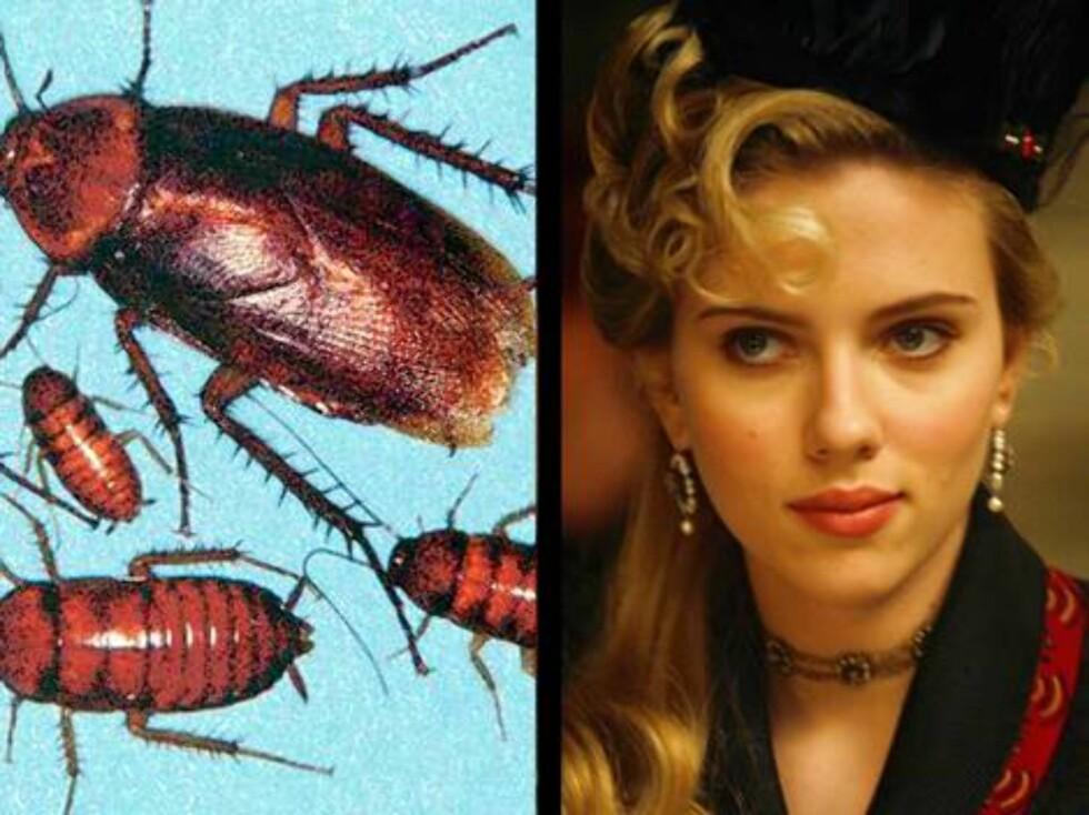 Skuespillerinnen Scarlett Johansson får hetta av kakkerlakker. Ikke rart, for da hun var liten våknet hun om natta av at en satt på nesa hennes! Foto: AP/Scanpix