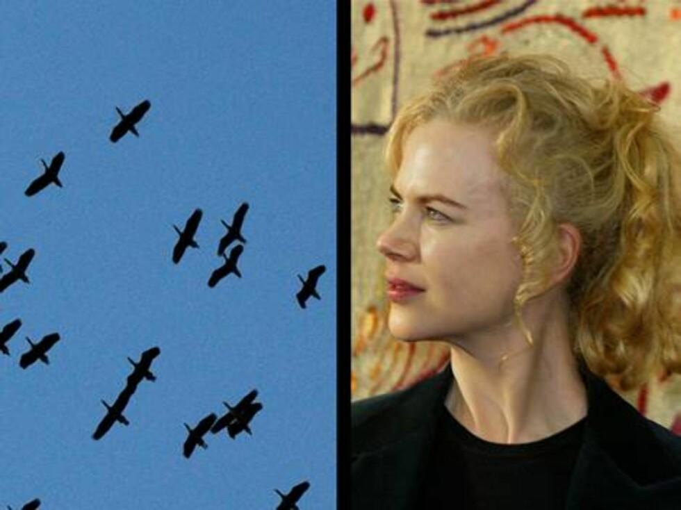 Oscar-vinneren Nicole Kidman er ei tøff dame, men fugler får henne til å krysse gata? Foto: AP/Scanpix