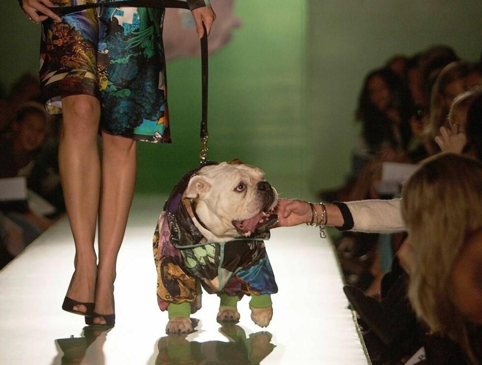 """MED PÅ MOTEN: Hund og """"eier"""" med samme antrekk.. Foto: All Over Press"""