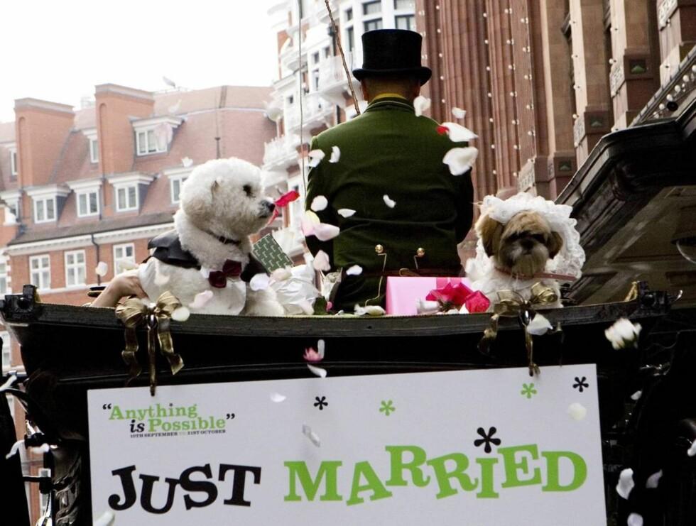HAPPY EVER AFTER: Timmy og Muffin satser på å stifte familie og flytte inn i eget hundehus etter bryllupet. Foto: Stella Pictures