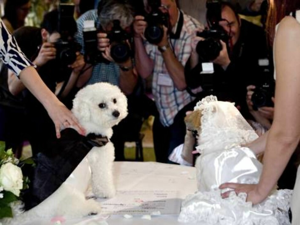 London 2006-09-12  'Dog Wedding' of Muffin (Shih Tzu) & Timmy (Bichon Frise) at Harrdos.  Pic shows: The press photographers at the signing of the registrar. .   Photo: David Graham/UPPA/Photoshot  Code:4034/ UDG023602  COPYRIGHT STELLA PICTURE Foto: Stella Pictures