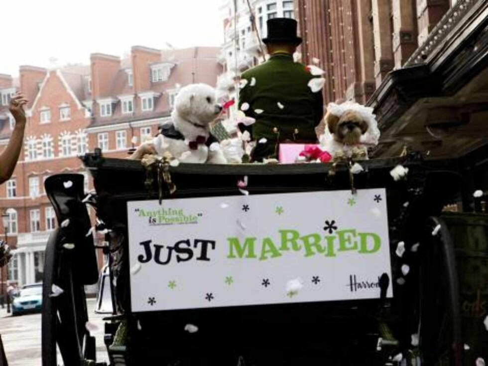 LONDON 2006-09-12  'Dog Wedding' of Muffin (Shih Tzu) and Timmy (Bichon Frise) at Harrods.  Photo: David Graham/Photoshot  Code: 4034/UDG023602_0013  COPYRIGHT STELLA PICTURES Foto: Stella Pictures