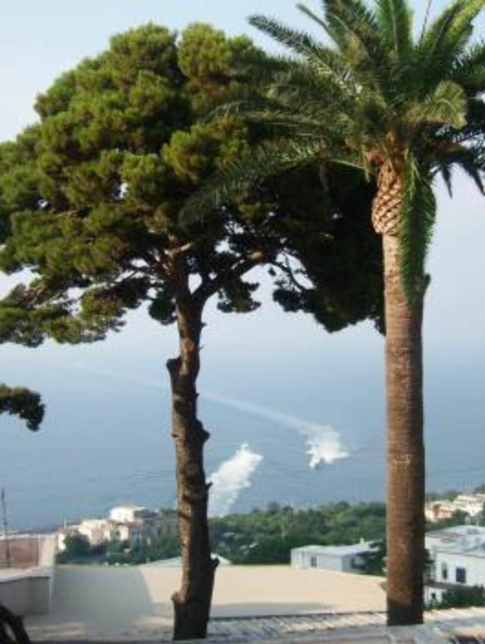 UTSIKT SOM HOLDER: Nesten uansett hvor på Capri du befinner deg, vil du få en fantastisk utsikt. Foto: Erik Valebrokk