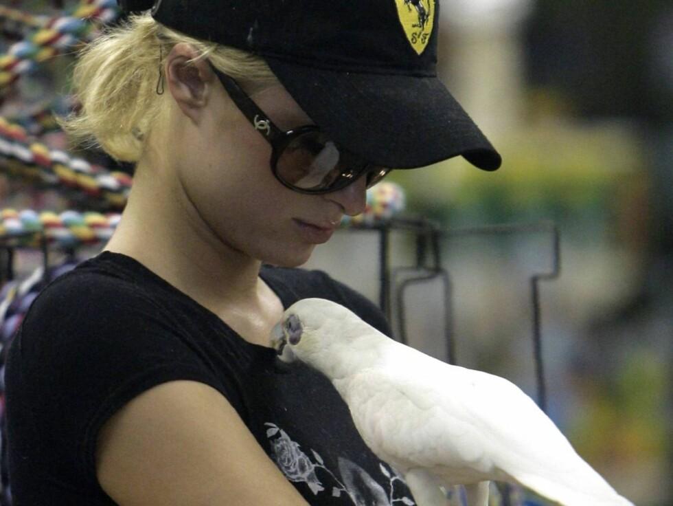 <strong>PARIS VIL HA POLLY:</strong> Paris falt for denne hvite papegøyen i dyrebutikken. Foto: All Over Press