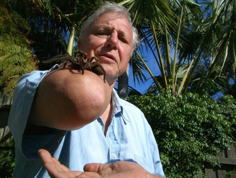 UTFORSKER NATUREN: Sir David Attenborough. Foto: NRK