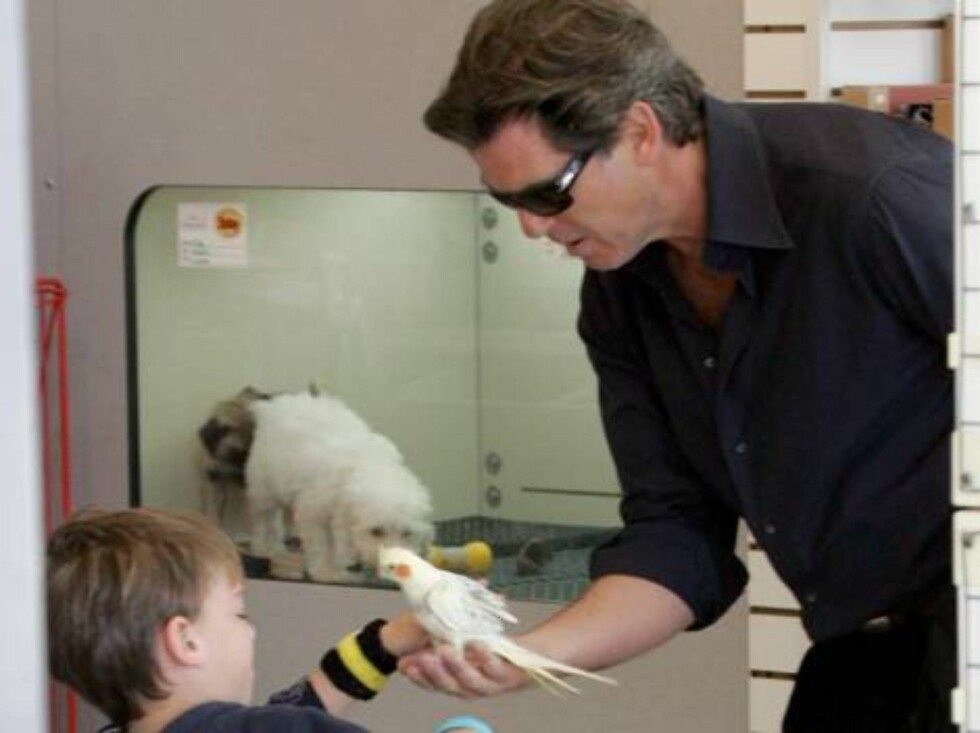 Pierce Brosnan visiting a pet store and shows a white parroket to his son Paris. January 28, 2006 X17agency exclusive / ALL OVER PRESS Foto: All Over Press