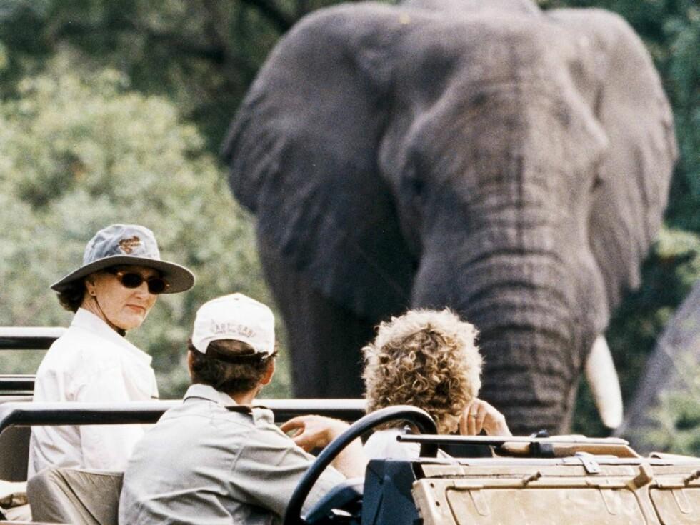 SNABLE GØY: Sonja koste seg i møtet med verdens største landdyr. Foto: All Over