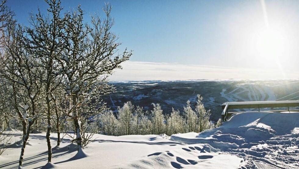 VINTERPARADIS: Her på Geilo skal Vollvik bygge et av bygdas mest lukseriøse vinterslott.