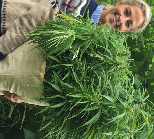 <strong>PLUKKET CANNABIS:</strong> Jannecke Weeden med en stor bunt cannabis - riktignok med lavt innhold av det psykoaktive middelet THC. Foto: Stian Grytten / Privat