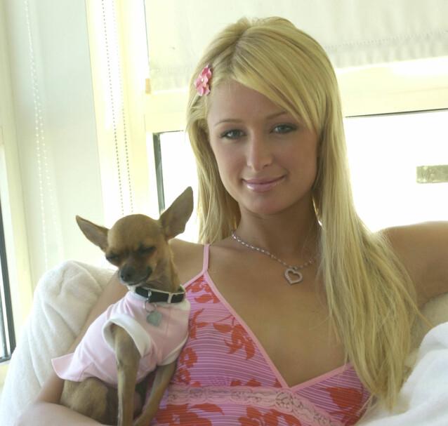 DEN GANG DA: Paris Hilton ble verdenskjent for sexfilmen og realityserien «The Simple Life» samme år. Her poserer hun sammen med hunden Tinkerbell i 2004. Foto: AP, NTB scanpix