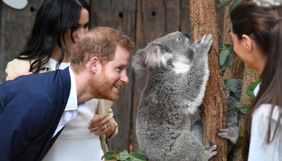 <strong>NYSGJERRIG:</strong> Prins Harry var tydelig begeistret da han fikk møte vesle Rubi. Foto: NTB scanpix