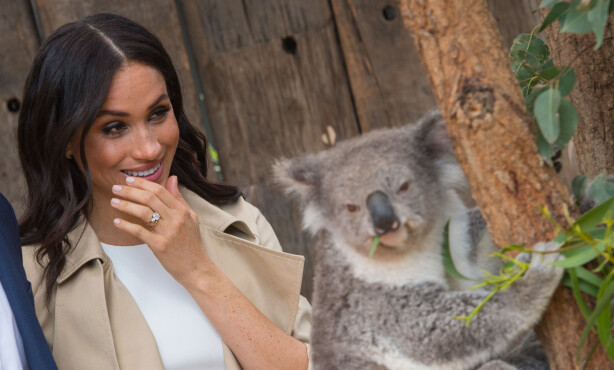 <strong>FNIS:</strong> Hertuginne Meghan smilte konstant under møtet, men holdt aldri koalaen selv. Avgjørelsen ble ifølge Mirror ikke tatt på bakgrunn av redsel for sykdom. Foto: NTB scanpix