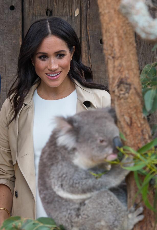 <strong>ULOVLIG:</strong> I Sydney, som ligger i New South Wales, er det ulovlig å kose med koalaer. Foto: NTB scanpix
