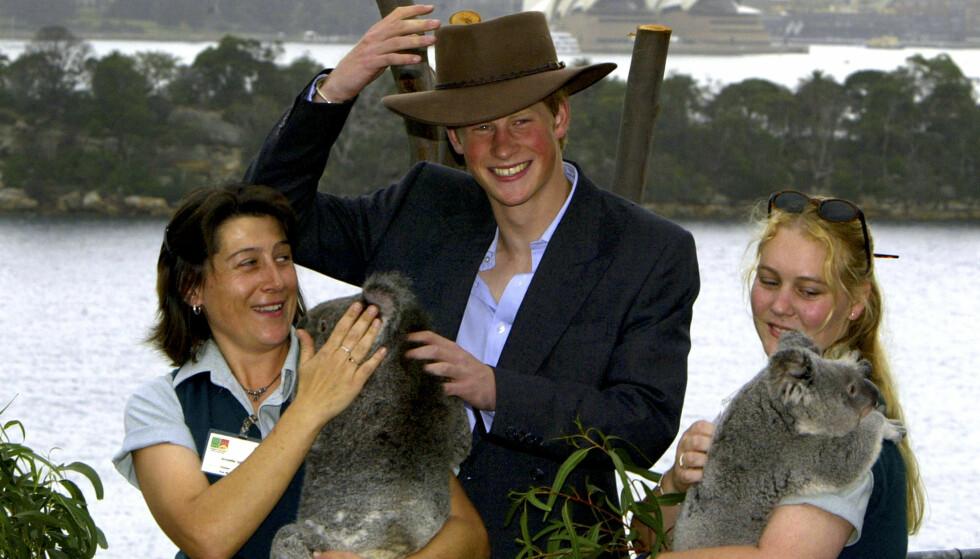 <strong>VÆRT DER FØR:</strong> Prins Harry besøkte samme dyrehage i 2003, der han også fikk møte en rekke søte koalaer. Foto: NTB scanpix