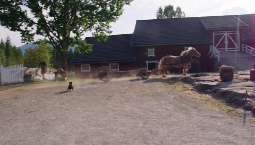 <strong>LØP LØPSK:</strong> Hesten løp ned Svein Østvik, før den galopperte over gårdsplassen. Foto: TV 2