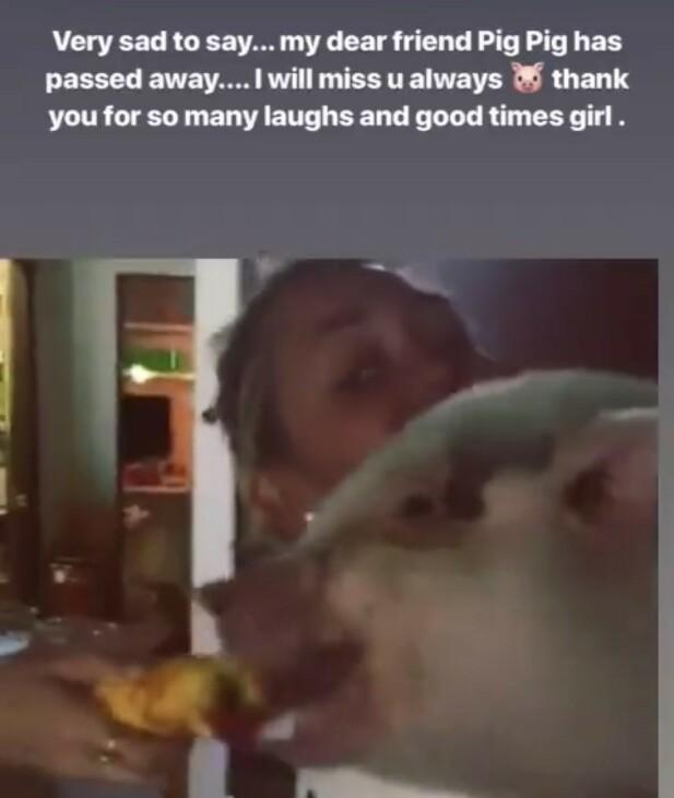 STORT SAVN: Miley Cyrus takket kjælegrisen for mange gode stunder sammen i en koselig bildeserie på Instagram-story. Foto: Skjermdump/@mileycyrus.