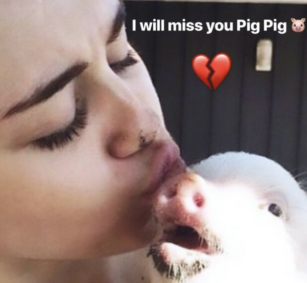 ADOPTIVGRIS: Stjernen adopterte grisen i 2014. Foto: Skjermdump/@mileycyrus