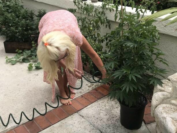 OVERRASKET: Maria Montazami fant marihuana på datterens balkong. Foto: Skjermdump fra blogg / Maria Montazami
