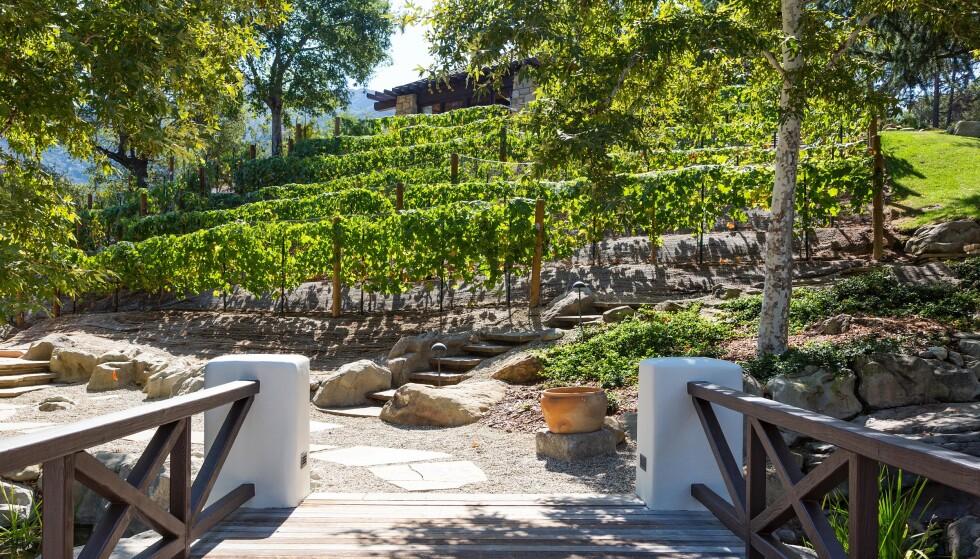 VINHAGE: Det er ikke alle som kan produsere egen vin. Det har Liam Payne hatt mulighet til. Foto: NTB Scanpix