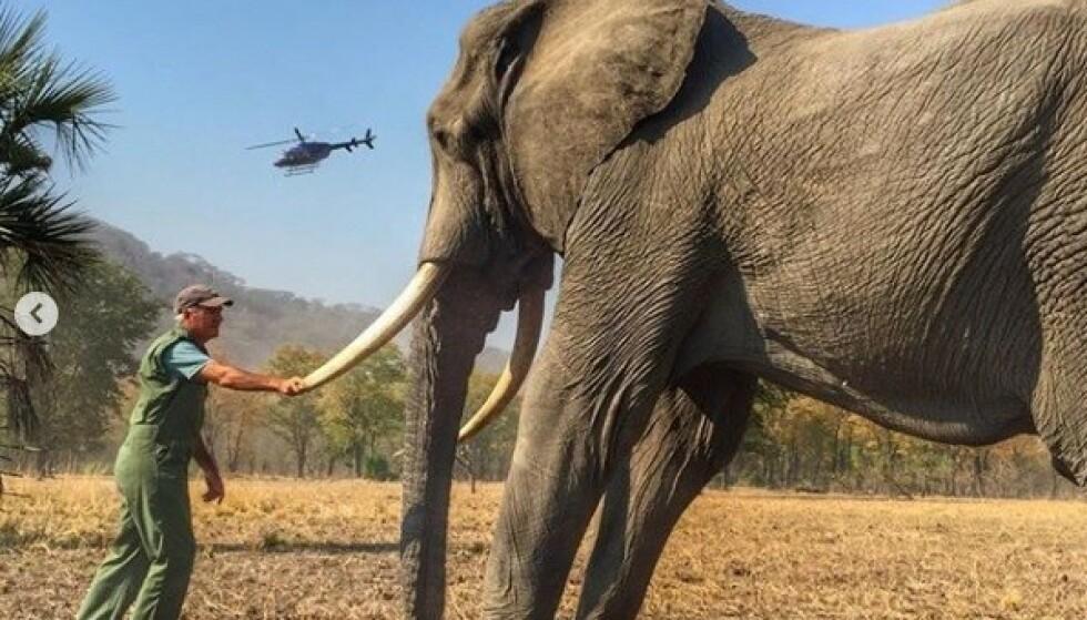 VISTE IKKE HELE BILDET: Dette er altså et av bildene som vakte stor oppsikt. Bildet er delt på hertugparets offisielle Instagram-konto og er beskjært slik at man ikke får sett at elefanten opprinnelig er bundet på bakbeina sine. Foto: Skjermdump fra Instagram