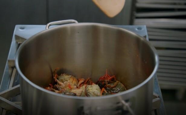 LEVENDE: Krabbene ble kastet direkte i en glovarm gryte, for så å bli knust med en tresleiv. Foto: TV3