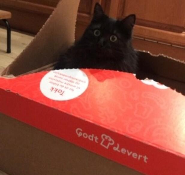 MJAU: Også familiens katt hadde glede av matkasse-leveringen.