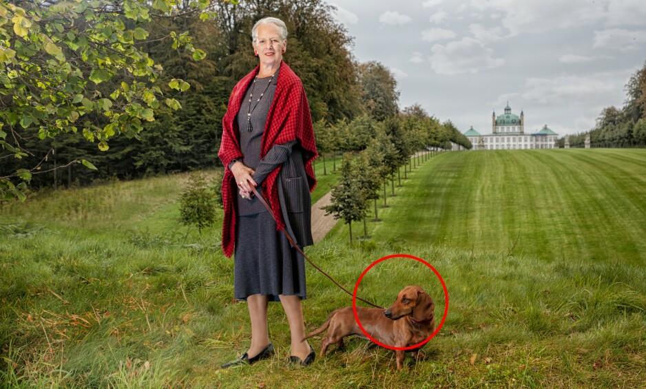 80 ÅR: Dronning Margrethe av Danmark fyller 80 år. I den anledning har kongehuset delt nye portretter av monarken. Foto: Per Morten Abrahamsen / Det danske kongehuset