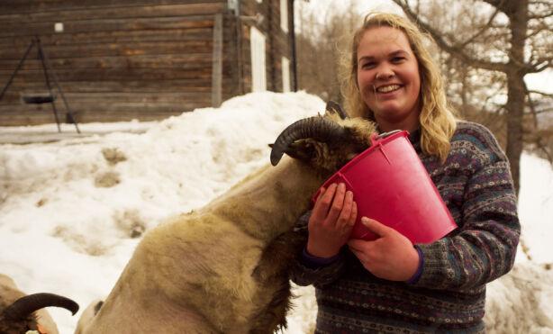 ELLEVE SAUER: Sauebonden Trine har elleve sauer hjemme. Hun kaster seg nå ut i kjærlighetslivet, i håp om å finne den rette. Foto: Espen Glomsvoll / TV 2