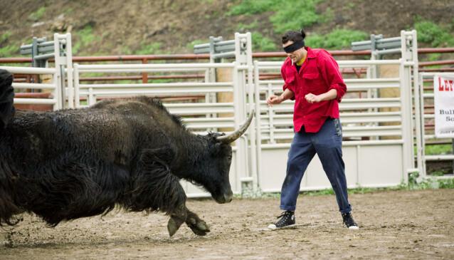 MANN MOT OKSE: Johnny Knoxville er ofte å se i ringen mot en okse, noe som tilsynelatende skal være noe av det han liker best. Foto: NTB Scanpix