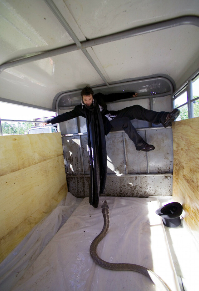 SLANGE: Gutta i «Jackass» har ikke vært fremmed for å leke seg med farlige dyr. Her er Bam Margera låst inn i en henger sammen med en slange. Foto: NTB Scanpix