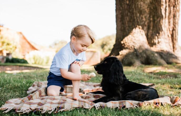 I SORG: Her er prins George sammen med hunden på sin treårsdag i 2016. Foto: Matt Porteous / AFP / NTB