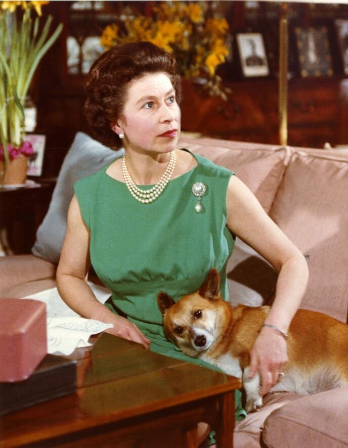 HUNDEOPPDRETTER: Dronning Elizabeth har eid over 30 hunder siden hun tok over som monark. Her i 1969. Foto: Joan Williams/Rex/NTB
