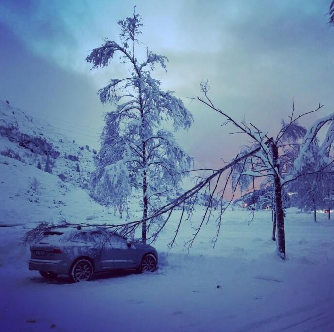 FELT TRE: Dette synet møtte tv-maleren da han returnerte fra skitur. Foto: Privat