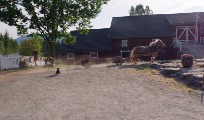 LØP LØPSK: Hesten løp ned Svein Østvik, før den galopperte over gårdsplassen. Foto: TV 2